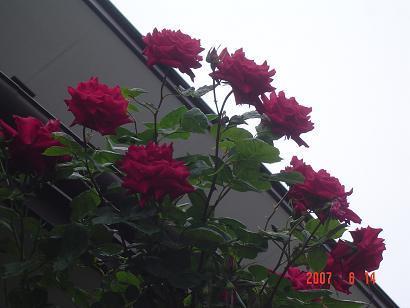 Dsc04709
